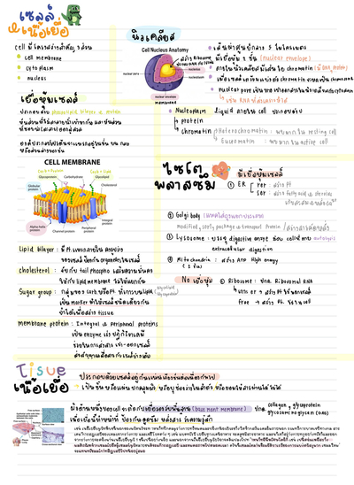 Anatomy cell and tissue ปก