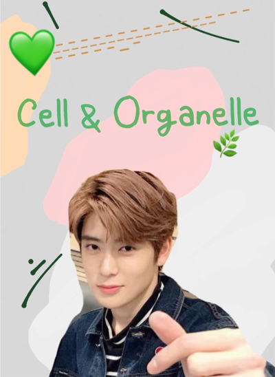 (biology) cell&organelle 🎄 ปก