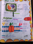 m.1 cell หน้า 4